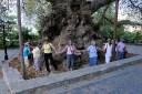 Σε ποιο μέρος της Ελλάδας βρίσκεται ο καταπληκτικός πλάτανος ηλικίας 2.400 ετών, που έχει περίμετρο 24 μέτρα και είναι από τους μεγαλύτερους στον κόσμο