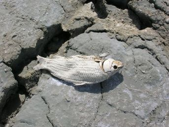 Εξ'αιτλιας της υψηλής αλμυρότητας του νερού, όλα τα ψάρια που φιλοξενούνταν στην λίμνη πέθαναν