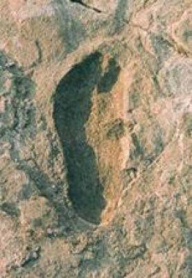 Australopithikos Afar -1