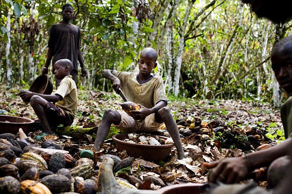 Παιδιά κάτω των 10 ετών χειρίζονται τεράστια μαχαίρια, με τα οποία σπάνε το σκληρό κέλυφος που φιλοξενοί τους πολύτιμους καρπούς.
