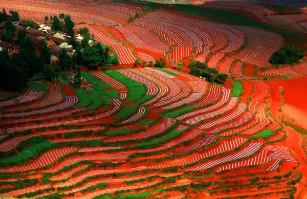 Red-Land