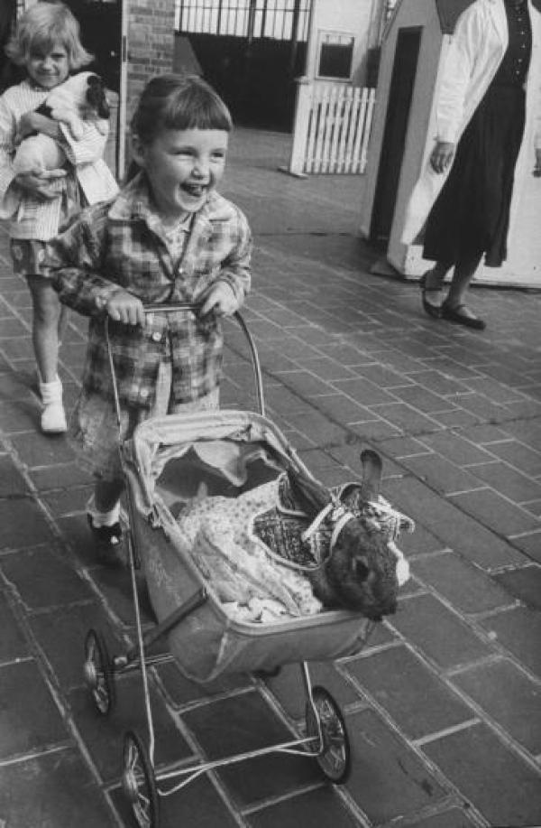 Η 4χρονη Λίντα Φοξ σπρώχνει το καρότσι με ένα κουνελάκι ντυμένο με ρούχα μωρού