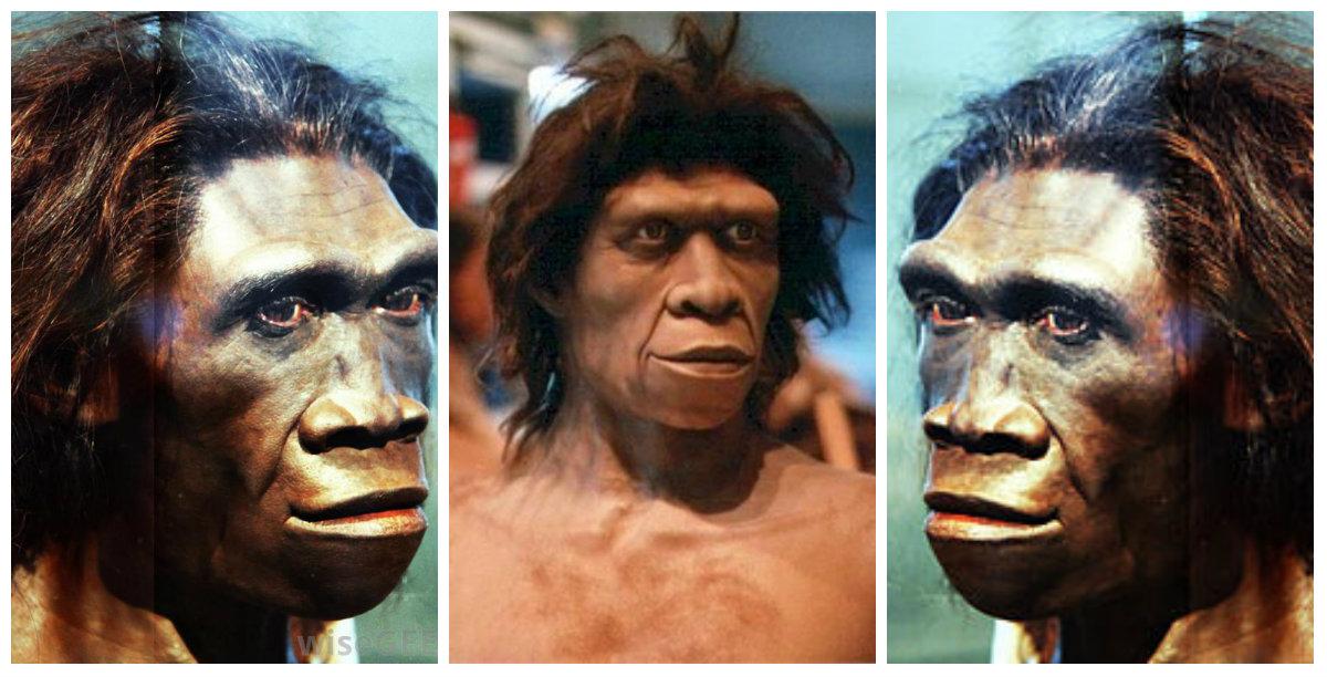 """""""Ο Homo erectus δεν ήταν ένας ηλίθιος πίθηκος"""". Νέα θεωρία υποστηρίζει ότι ο """"όρθιος άνθρωπος"""" ταξίδεψε μέχρι την Κρήτη και """"εφηύρε"""" τον λόγο"""