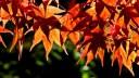 Φθινοπωρινή ισημερία. Ξεκινά και τυπικά το φθινόπωρο το βράδυ της Τετάρτης