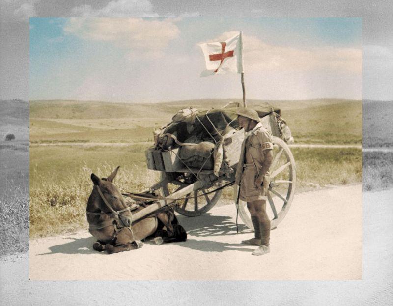 Ο στρατιώτης που προσπαθεί να πείσει το μουλάρι του να σηκωθεί. Το άγνωστο έπος των ζώων και η συνεισφορά στα βουνά της Αλβανίας