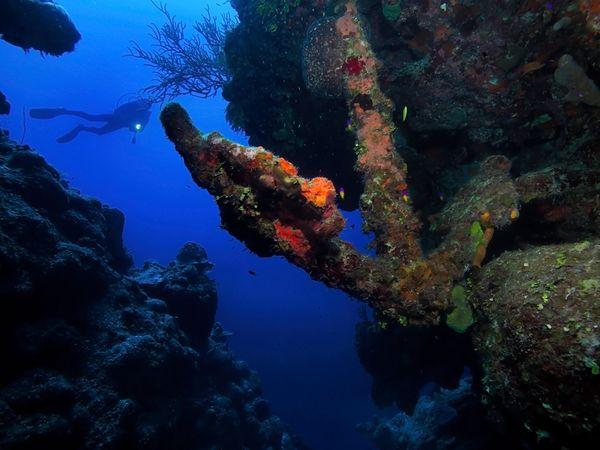diver-reef-turks-caicos_38995_600x450