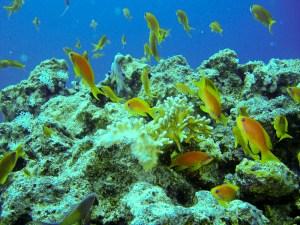 scufundari in marea rosie