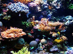 marea bariera de corali , o minune a naturii