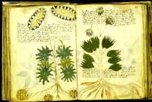 manuscrisul lui voynich , o enigma nedescifrata