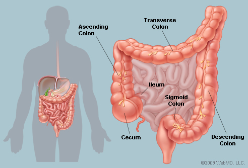 colonul si intestinul subtire