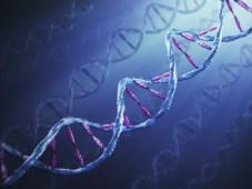 ADN-ul