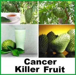 graviola ,fructul care omoara cancerul