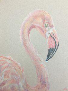 Flamingo / Kleurpotlood op papier 24 x 32
