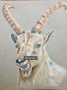 Steenbok- €60,- / Kleurpotlood op papier 32 x 41
