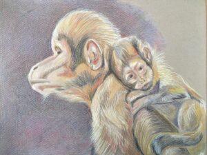 Geelborst kapucijnaapjes - €60,- / Kleurpotlood op papier 41 x 32