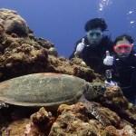 下地島でウミガメと一緒に体験ダイビング