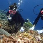 宮古島ファンダイビングとで体験ダイビングでウミガメ