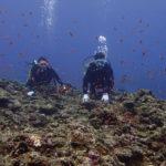 宮古島 ハナダイの根 体験ダイビング