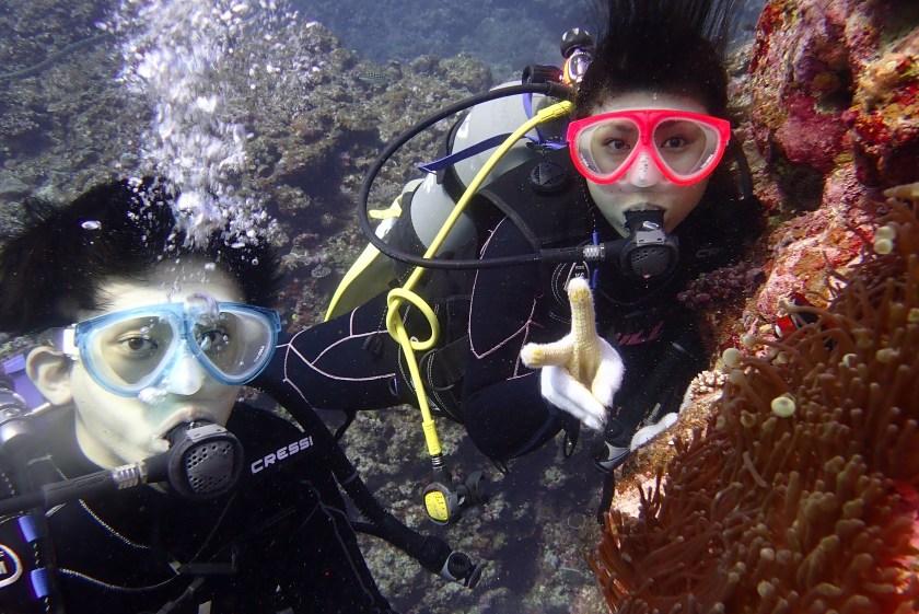 宮古島体験ダイビング ハマクマノミ