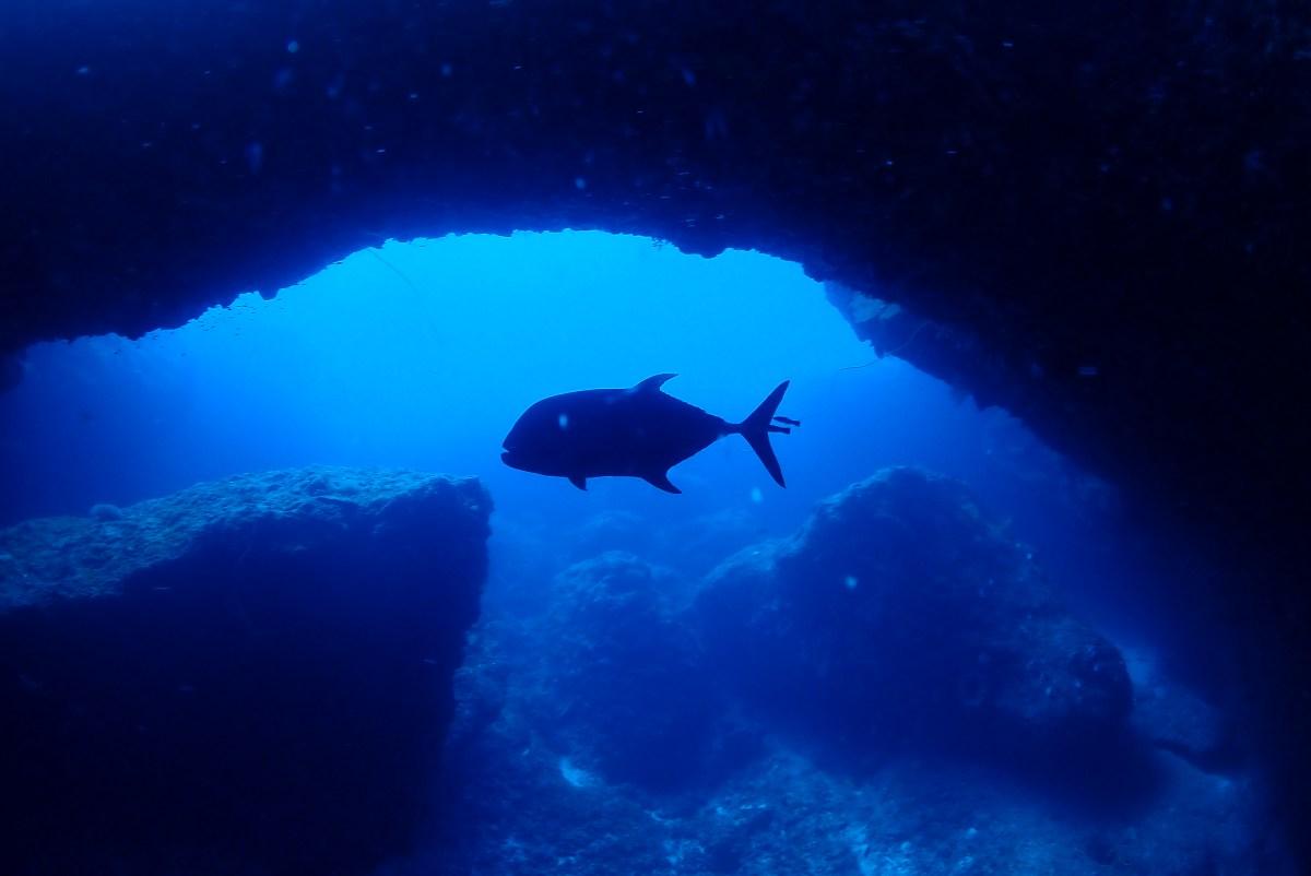 伊良部島へボートファンダイビングと体験ダイビング