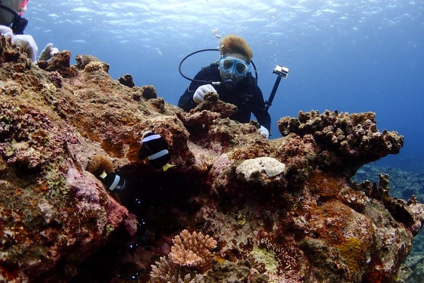 伊良部島で体験ダイビング
