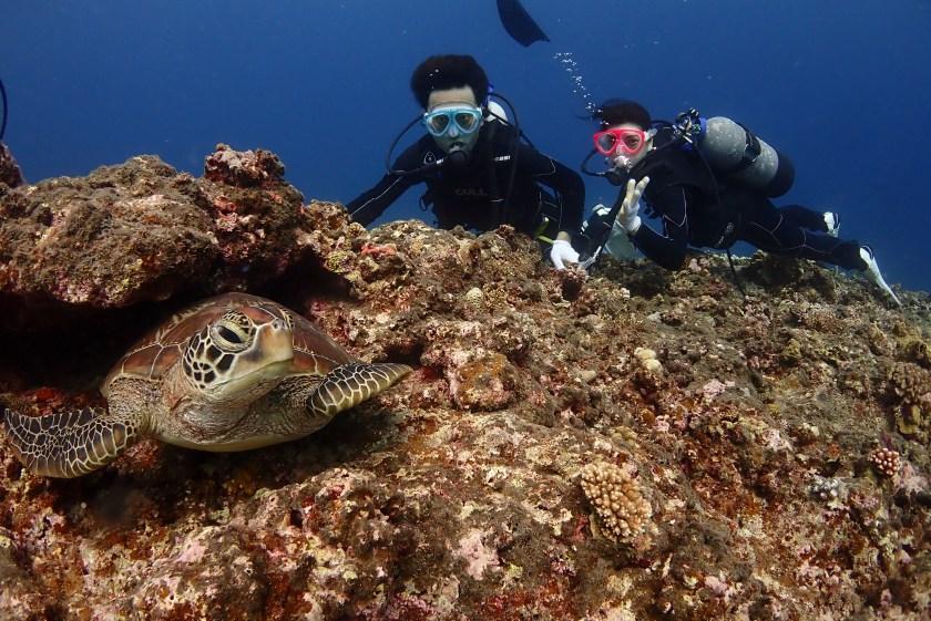宮古島・ウミガメと一緒に体験ダイビング