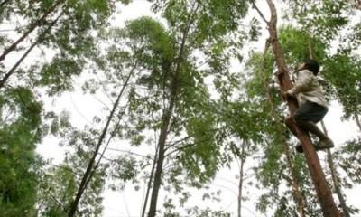 / Los árboles necesitan cerca de dos mil litros de agua cada año. | Foto: EFE