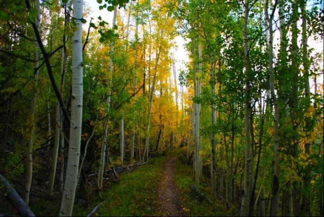 Colorado Fall Hike