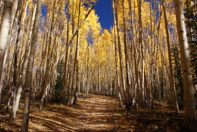 Fall Hike in the Aspens