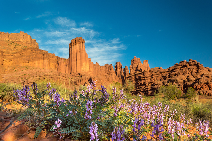 Fisher Towers Evening
