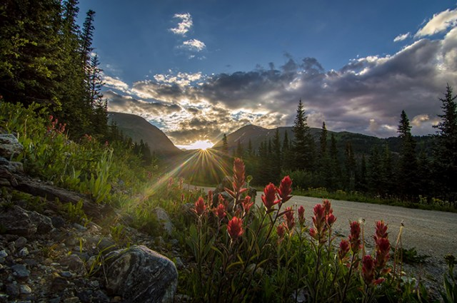 Colorado Wildflowers Under Evening Sun