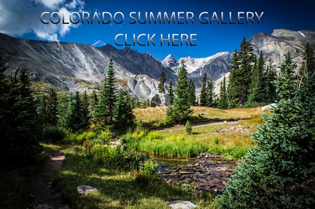Summer Gallery final