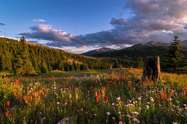 Wildflowers in the Evening Sun