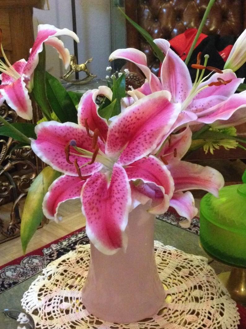 #stargazer lily