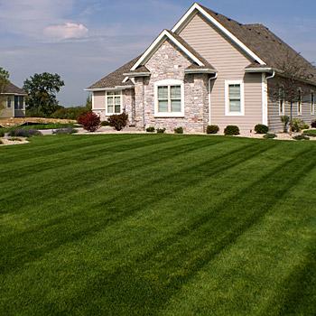 lawn care weed control fertilization