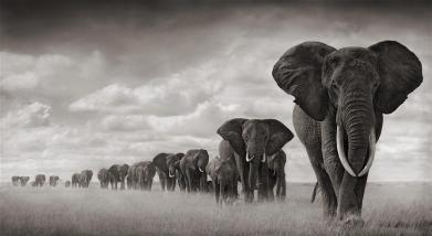 nick-brandt-elephant2