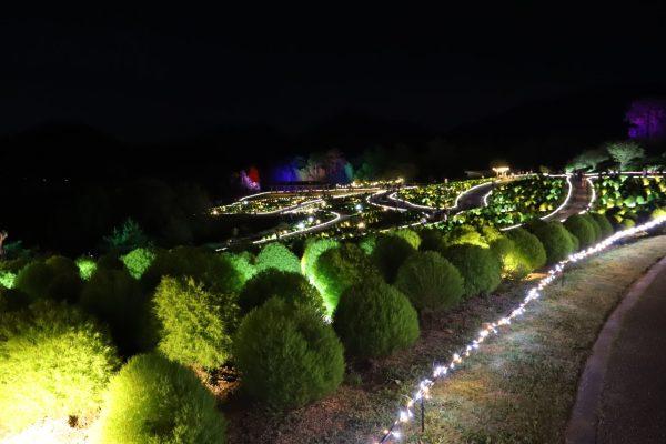 【国営讃岐まんのう公園】コキアライトアップ2021