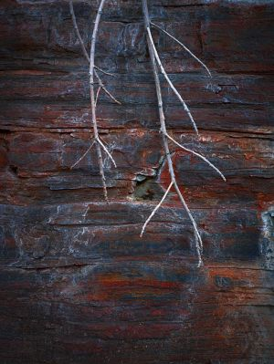 Mark Kelly - 'Under_The_Sea I' - (98cm x 78cm)