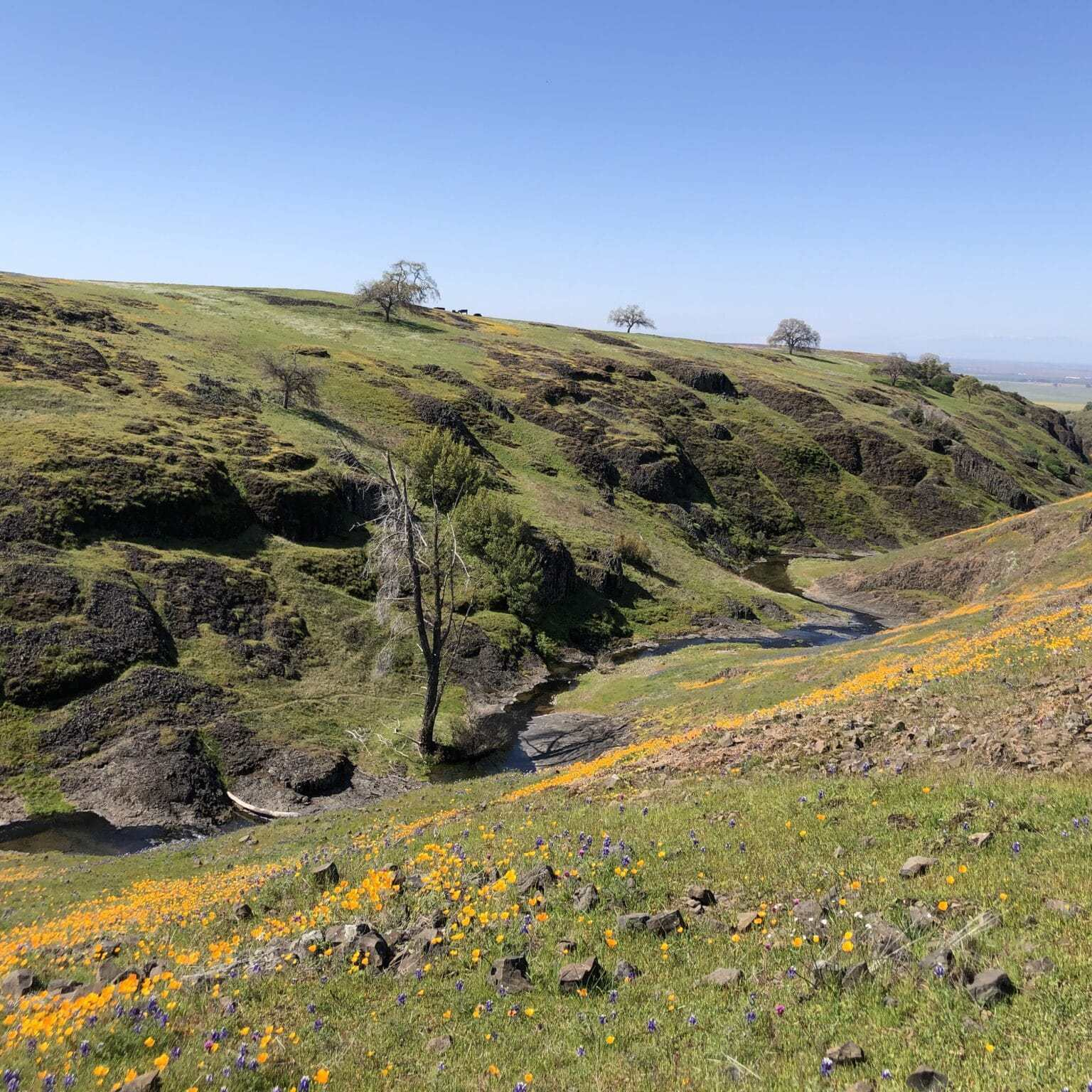 Stream and wildflowers, North Tabletop Mountain Ecological Reserve