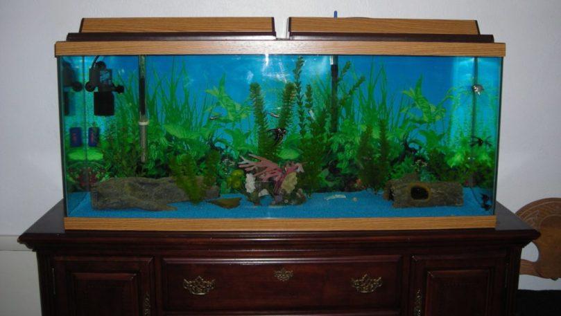 Starting fish tank