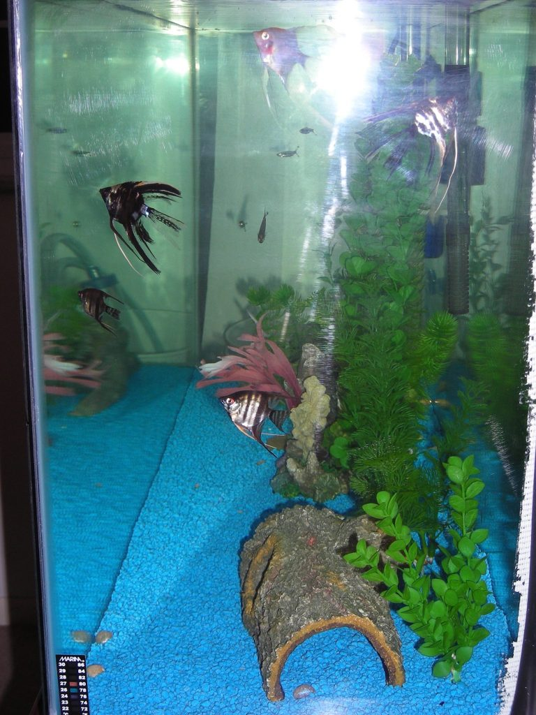 Side view of aquarium