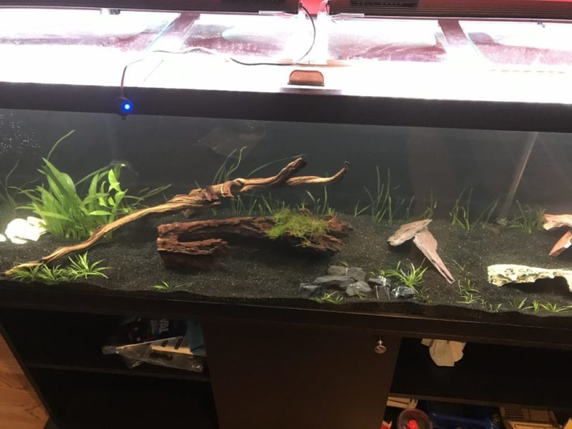 Setting the driftwood and plants
