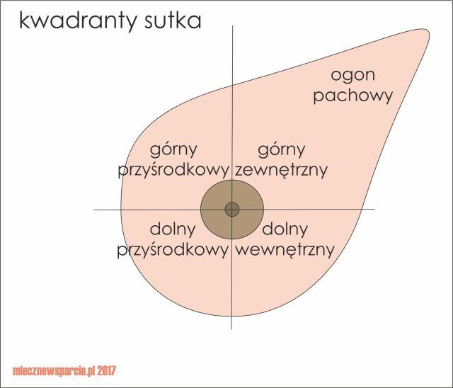 kwadranty