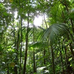 Forest Canopy Diagram Rat Dissection Test Questions Tropical Rainforest