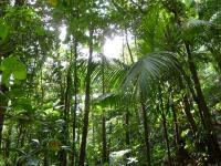 MLeWallpapers.com - Sunlight Through Rainforest Canopy
