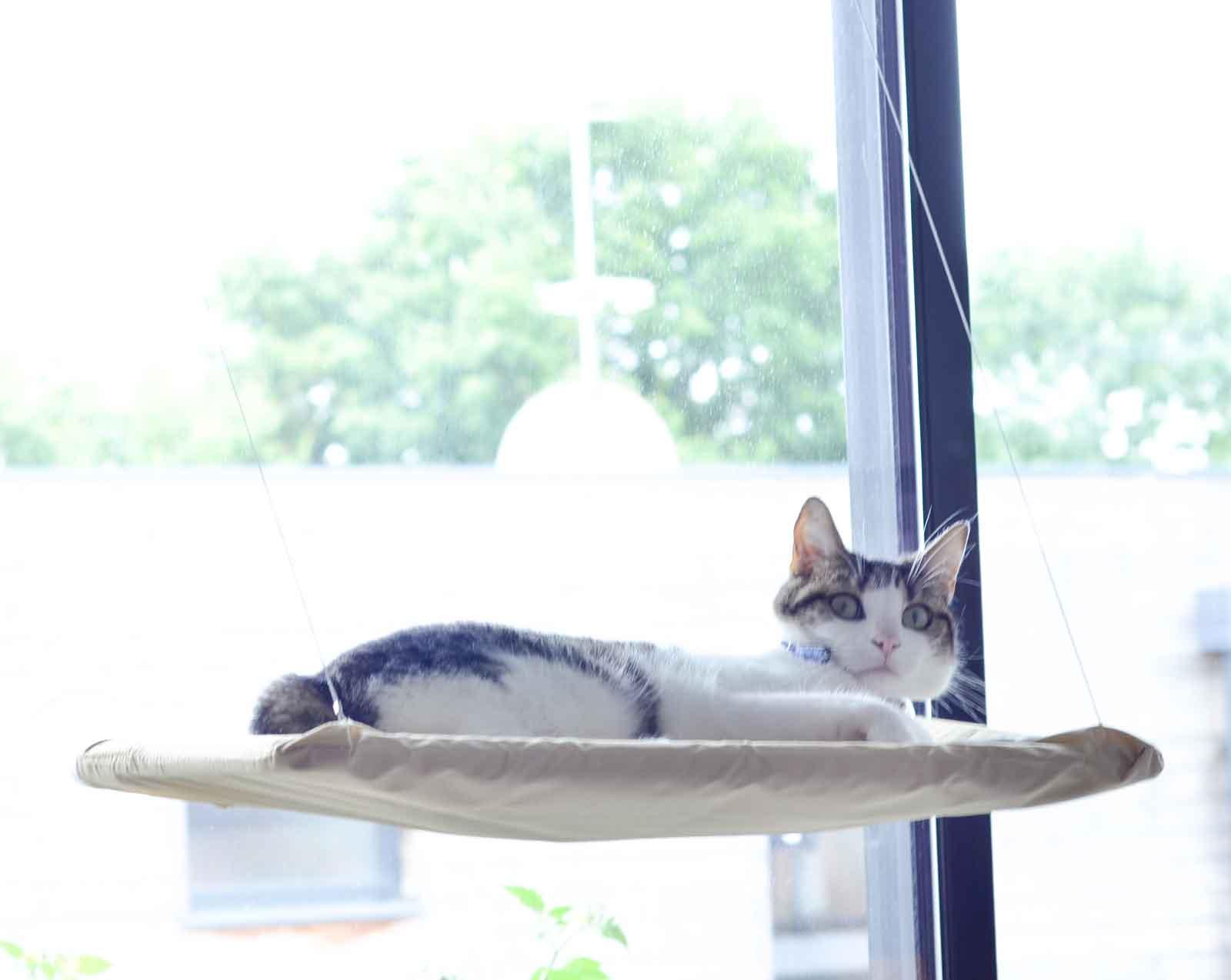 lit-suspendu-pour-chat