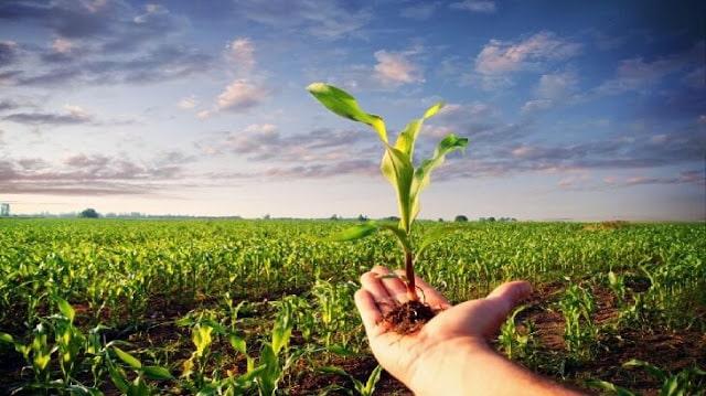 موضوع تعبير عن الزراعة واهميتها بالعناصر ملزمتي