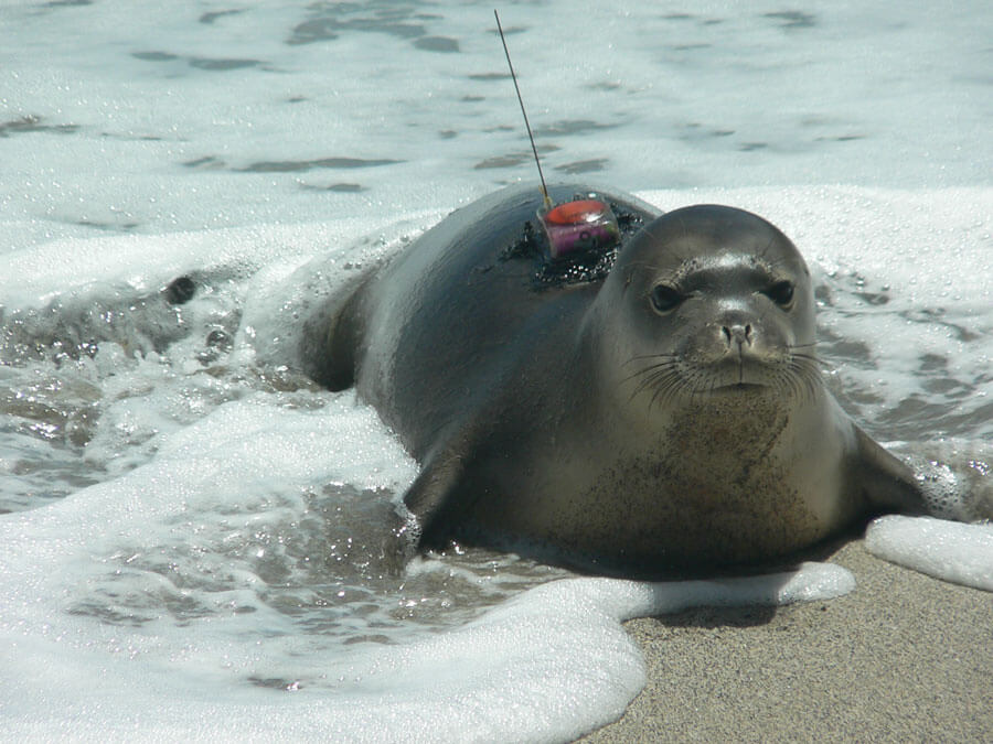 Research Program Proposal Requirements Marine Mammal