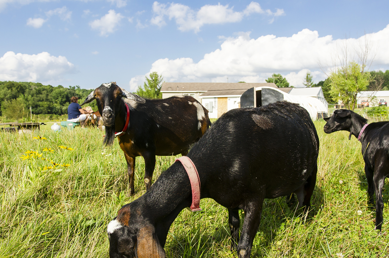 Bifrost Farms Menomonie Wisconsin