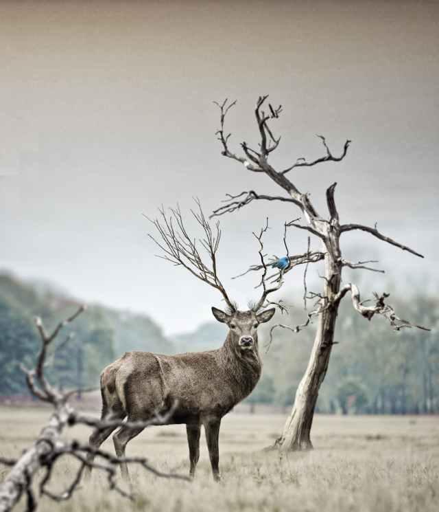 animal antler antlers blur